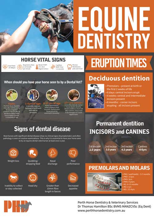Equine dentistry wall chart