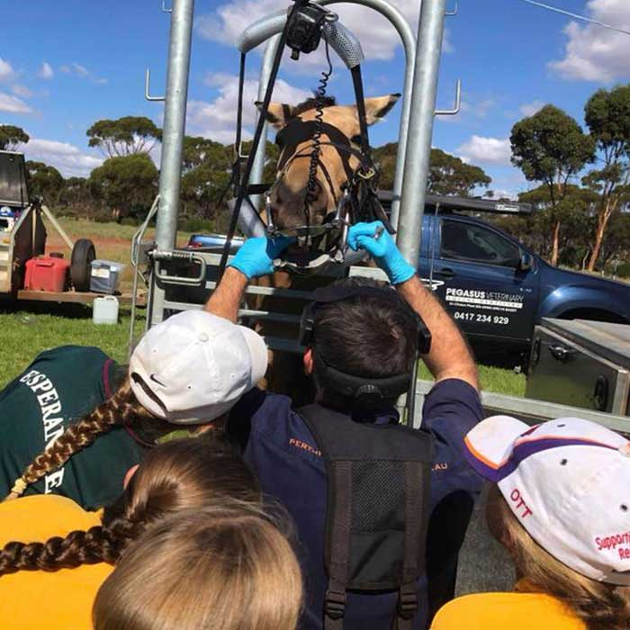 Dr Tom Hamilton giving pony club members in regional WA a look inside a horse's mouth