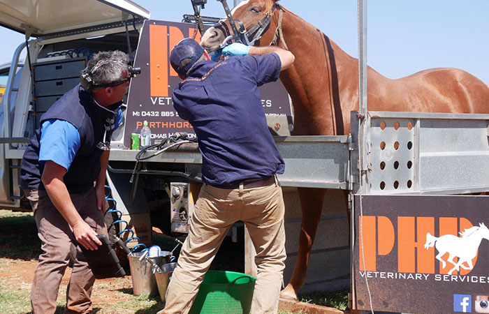 Dr Tom Hamilton and Dr Clinton Float working together on an equine dental patient in Perth