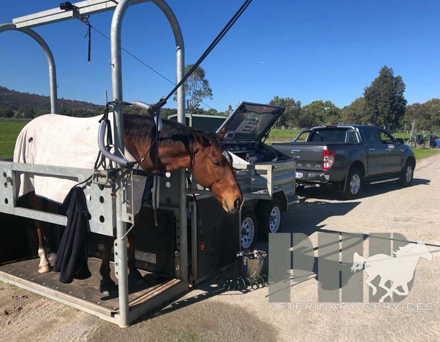 Horse in the Perth Horse Dentistry Mobile Crush